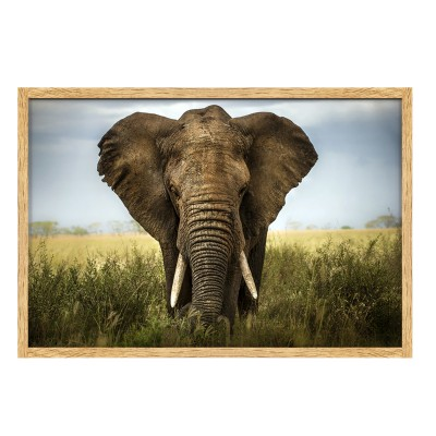 Photo Encadrée ELEPHANT en 40x60