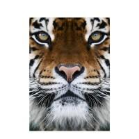 Photo sur toile d'un tigre en couleur, toile déco sur châssis apaisante et vivifiante.